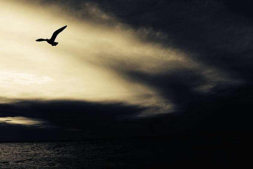 Eagle flying - Joyce