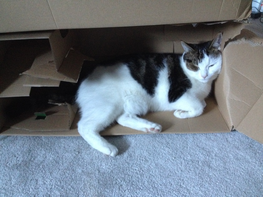 cat-in-box-lauras-essay-laura-photo-credit-1